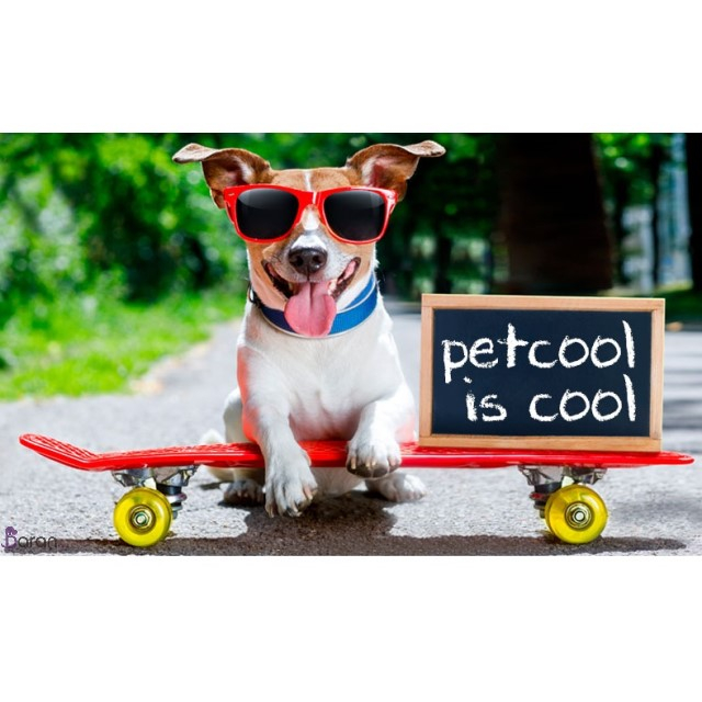 برند پت کول (PetCool)