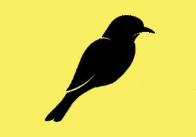 پرندگان توکان