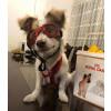 عینک سگ تافی