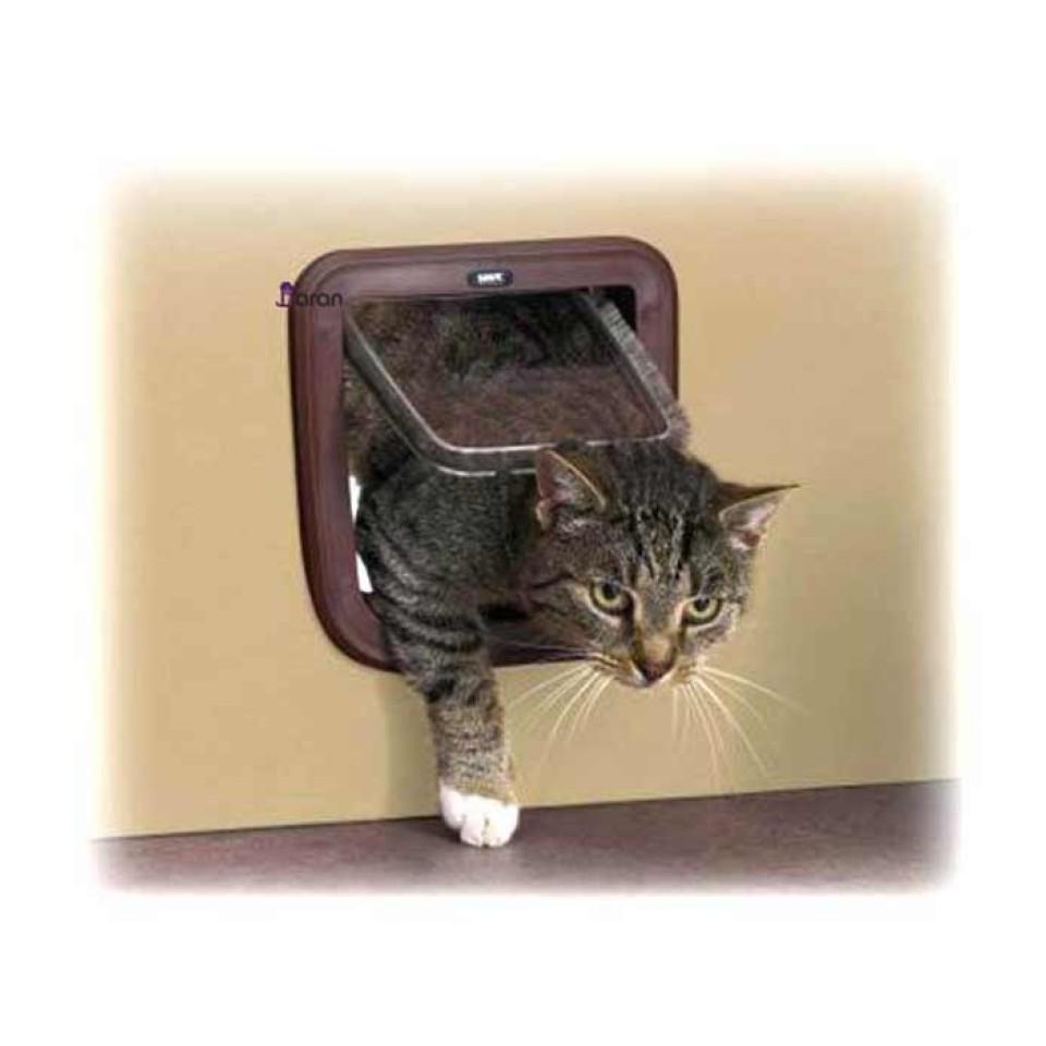 در تردد مخصوص گربه ساویک