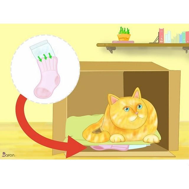 خنک کردن گربه ها در تابستان