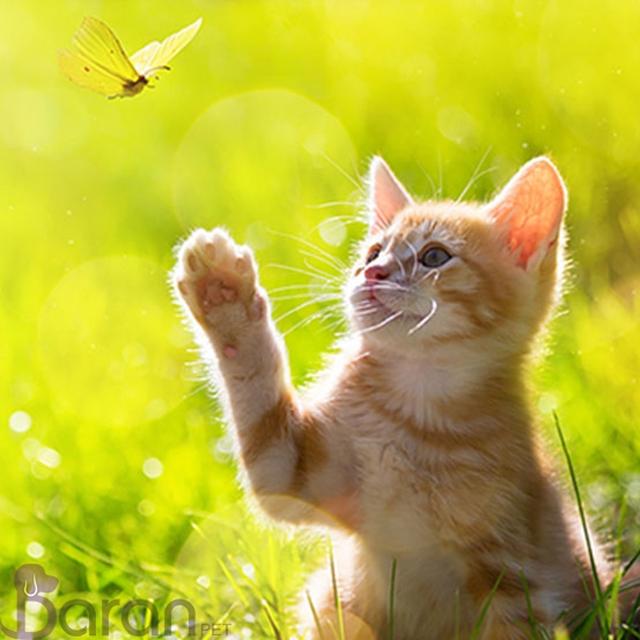 درک نیازهای روزانه گربه