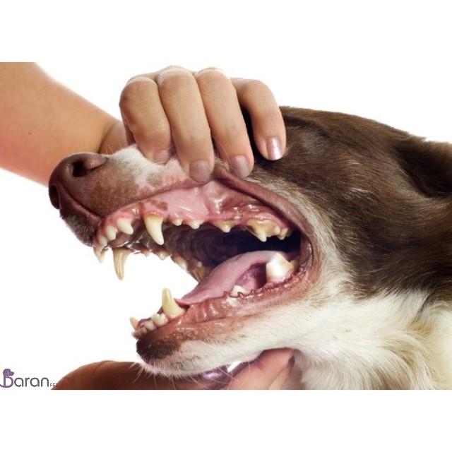 بیماریهای دندانی در سگ