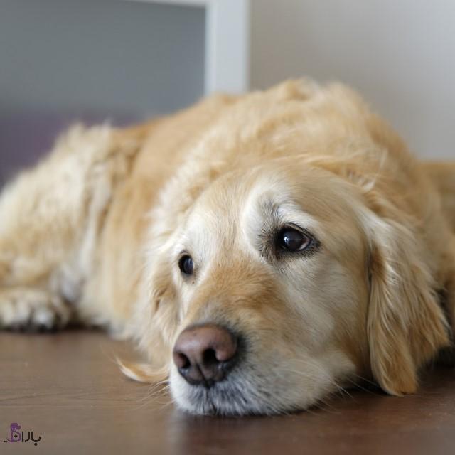 آشنایی با مشکلات قلب سگ