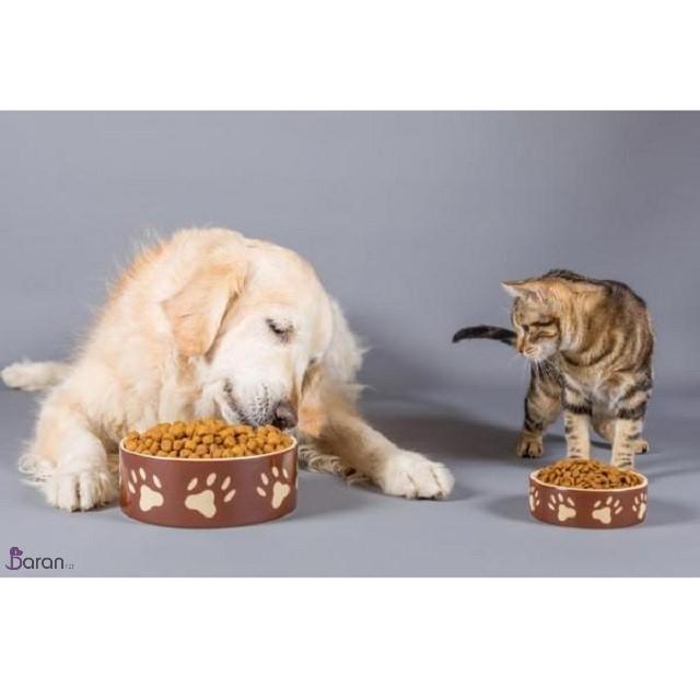 غذای خشک یا غذای خانگی کدام برای حیوانات بهتر است؟
