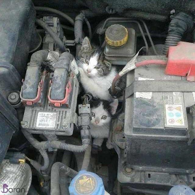 کمک به گربه های خیابانی در زمستان