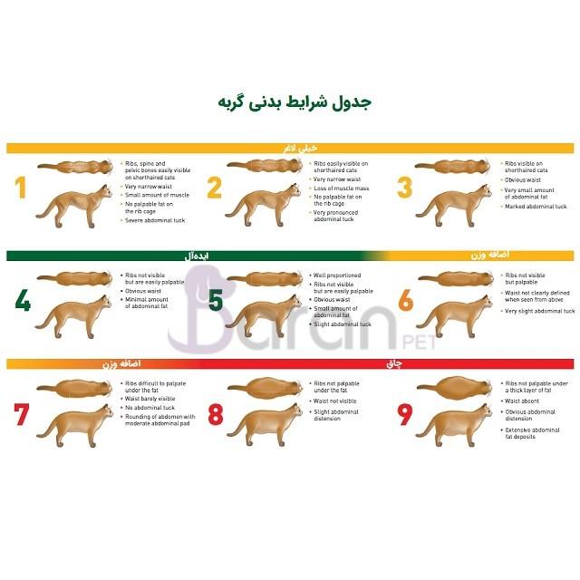 تعیین وضعیت بدنی گربه (Body condition score)