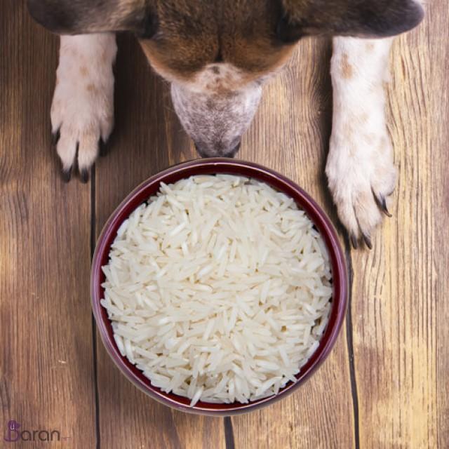 برنج برای سگ ها