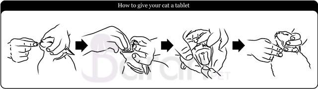 آموزش قرص دادن به گربه