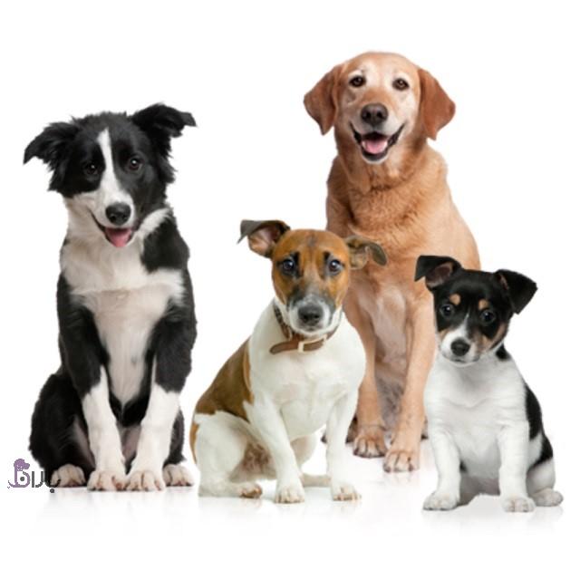 نژادهای محبوب سگ سال ۲۰۲۰